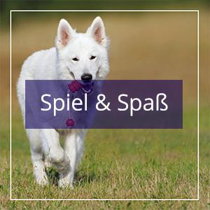 https://www.um-ex.com/wp-content/uploads/2017/08/Spiel-Spass.jpg